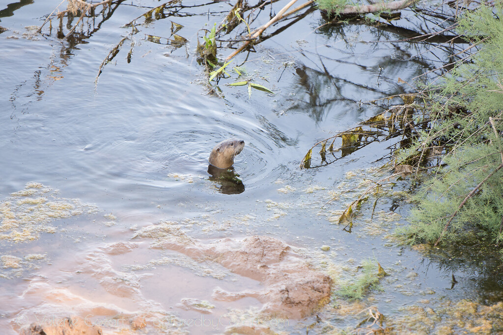 OtterAdventures-2