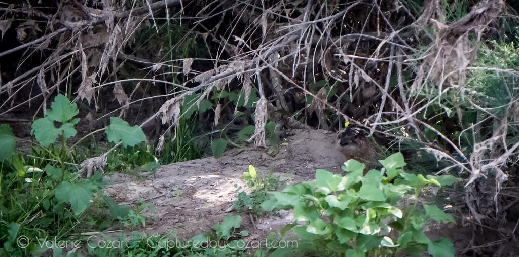 OtterAdventures-17