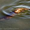 OtterAdventures-8