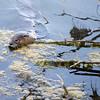 OtterAdventures-15