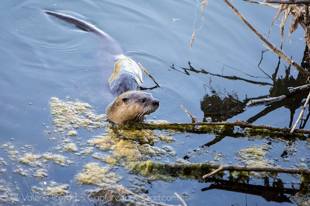 OtterAdventures-14