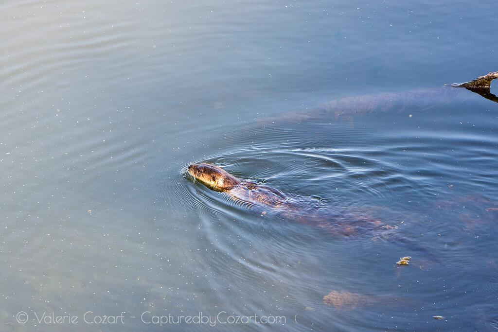 OtterAdventures-7