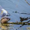OtterAdventures-16