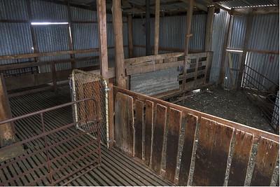 Shearing Shed5