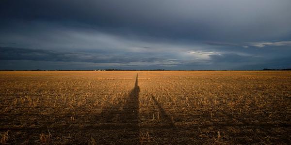 Farm paddock in early light.