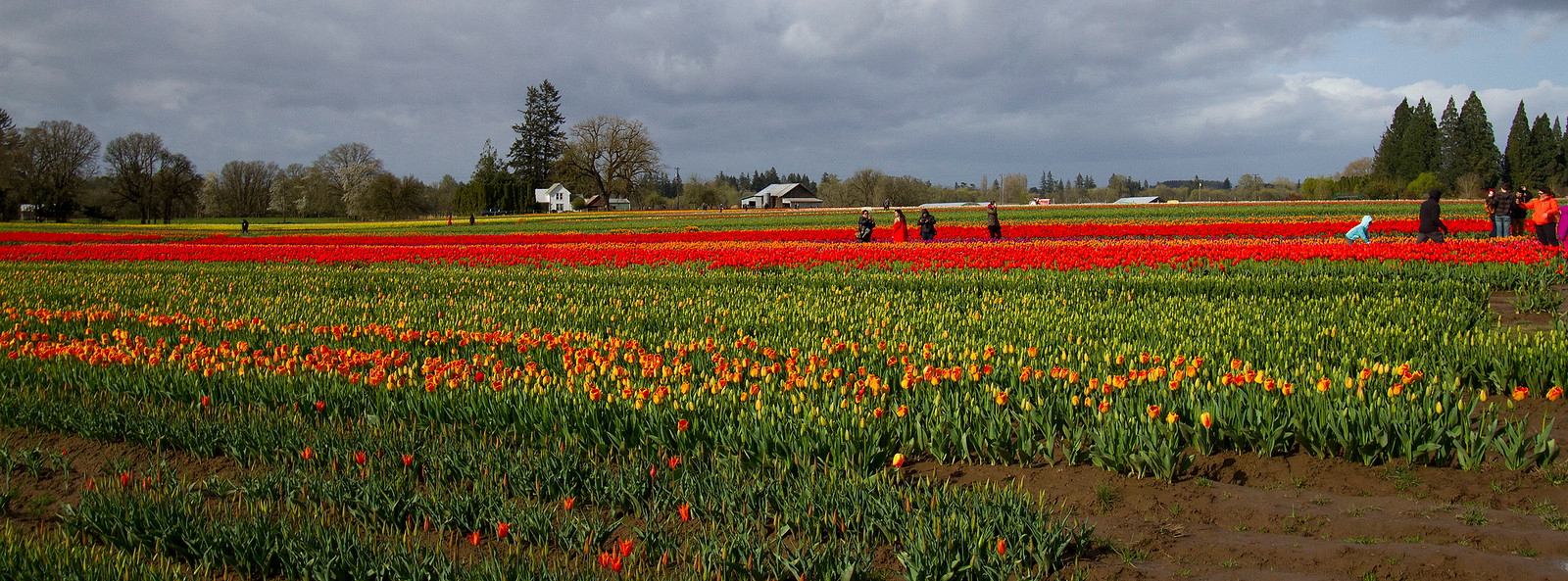 3-Strolling the tulips-IMG_0033