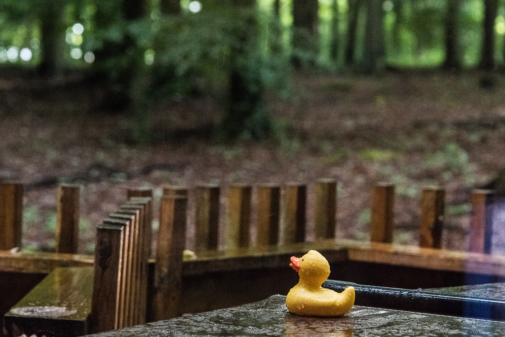 Our forest lodge came with an outdoor hot tub, complete with rubber duckie