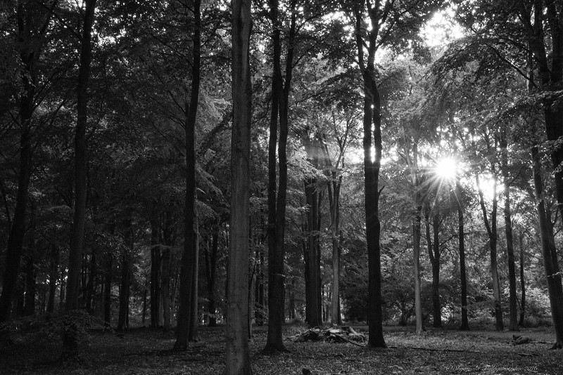 There's always light at the end of the woods...