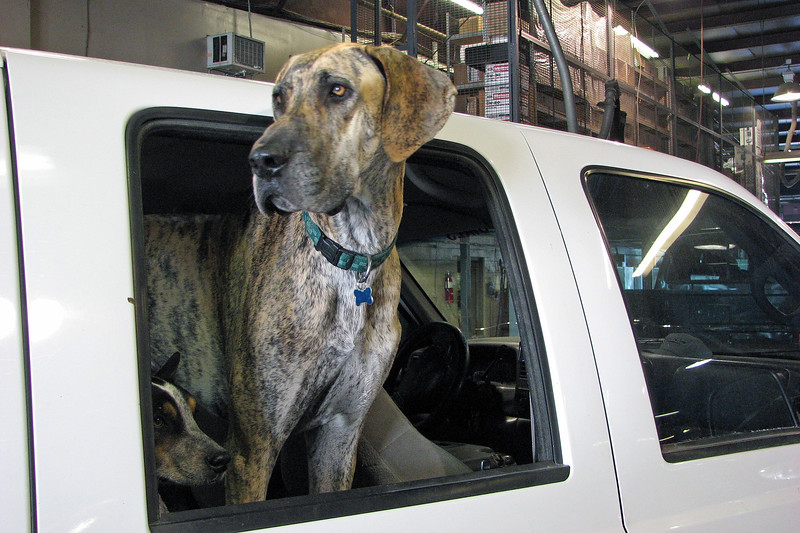 We had a number of customers who traveled everywhere with their dog(s) who had been trained to remain in the vehicle while the human goes about his/her business.