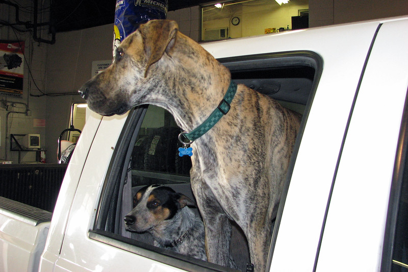 We frequently saw a lot of special visitors to the Service Department.  Such was the case on this day when these two guys arrived to have the oil changed on their truck.