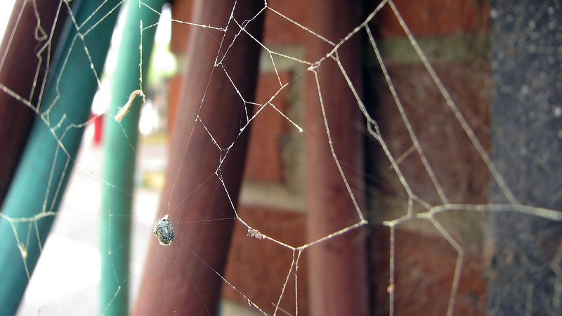Focusing on the actual webs was a little more challenging.
