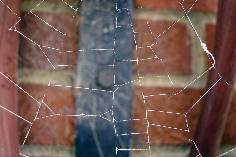 Spider web near the fuel island office.