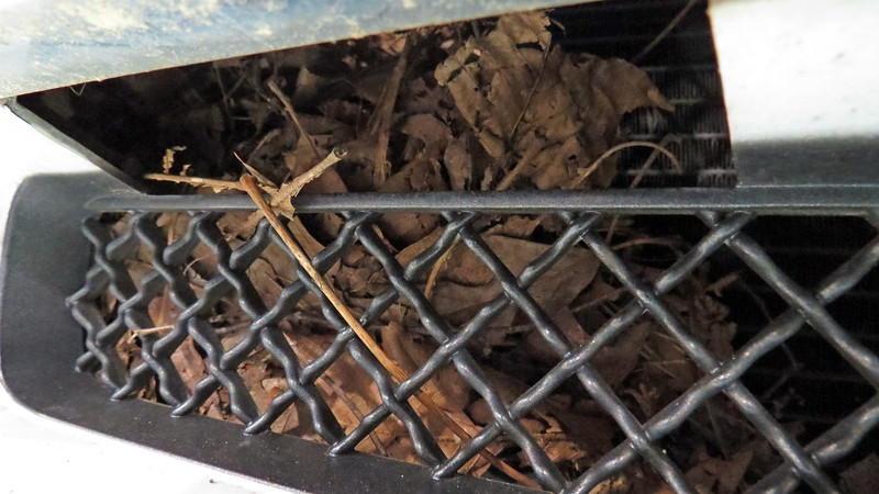 And to round out the tour of the vacation home, I found another nest behind the grill against the a/c condenser.
