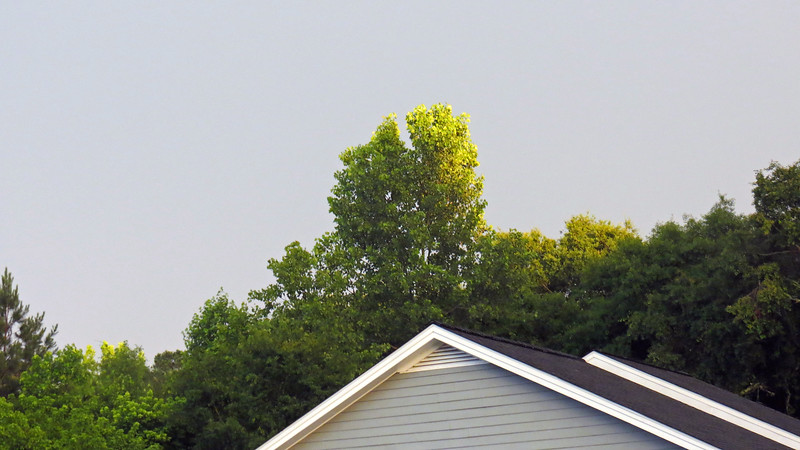 Sunlight is visible on the leaves even though the sky is cloudy and dark.