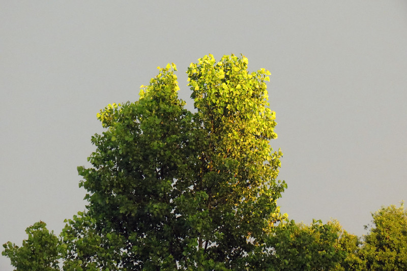 Sunlight reflecting off of the nearby trees.