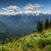 Alpine Meadow on Hurricane Ridge, Olympic National Park