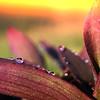 Gradiant Flower