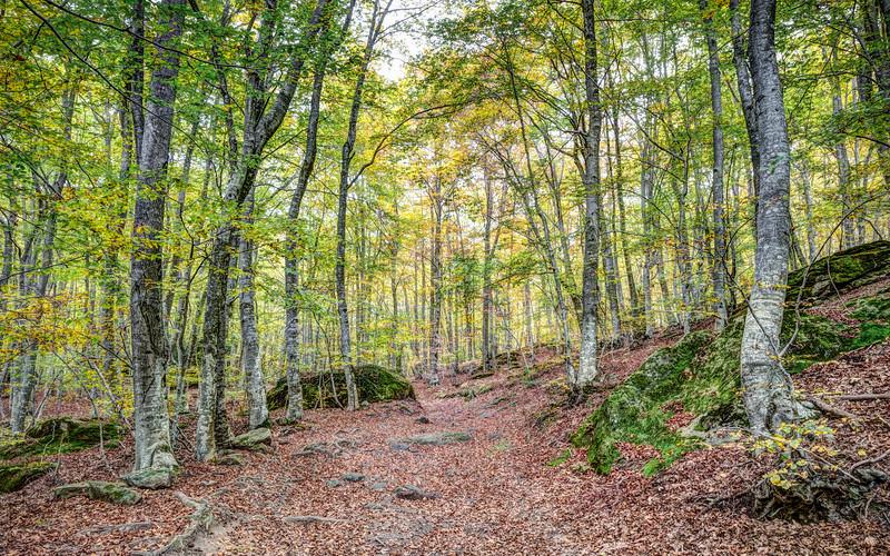 Autumn in the Enchanted Rocks (Catalonia)