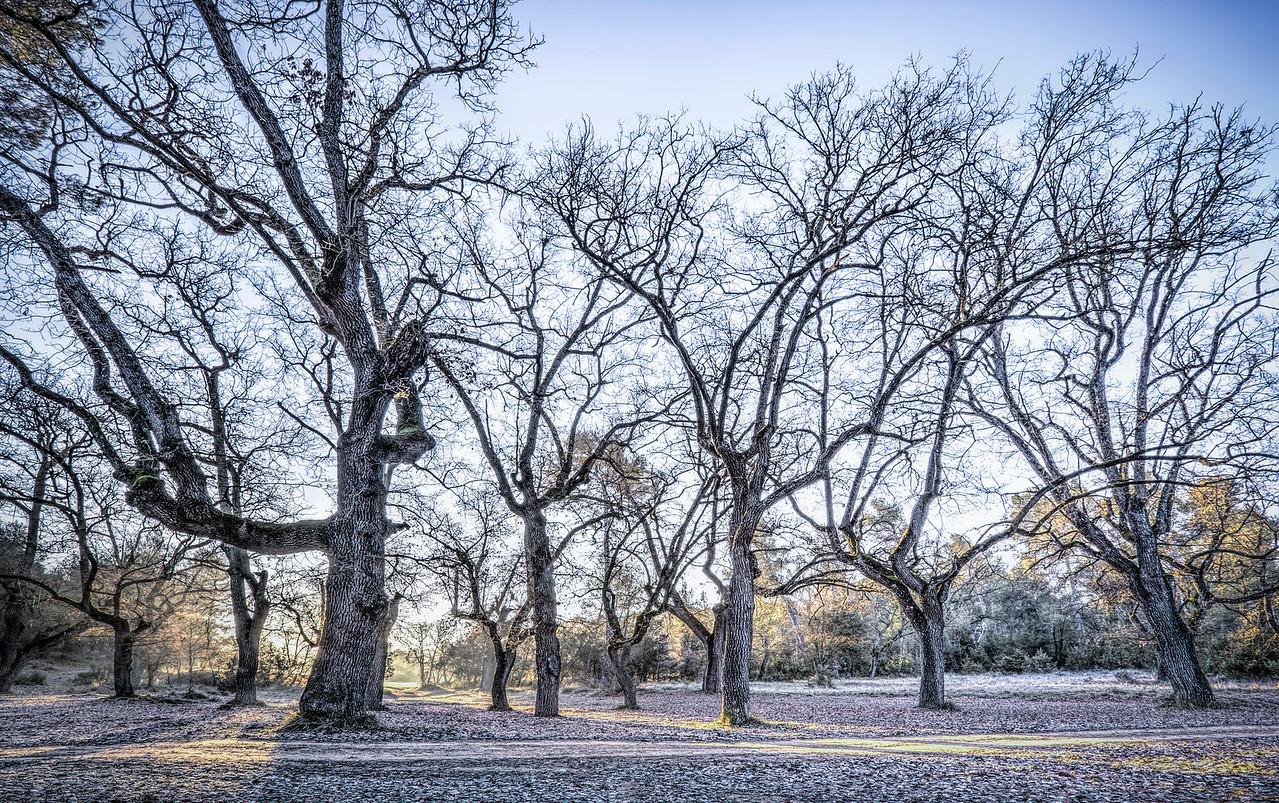 A Winter Morning (Roureda de les Tàpies, Catalonia)