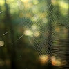 Spiderweb in the path