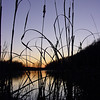 lake fayetteville cattails