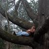 39/365 Napping in an oak tree