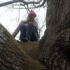 Jodean in the tree