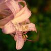Flowers 1B111110