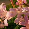 Flowers 1B111144