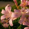 Flowers 1B111145