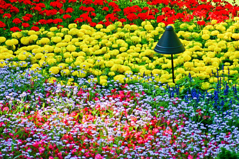 The First Flowerbed in Space