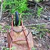 A wheelbarrow's demise