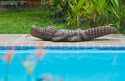 Stone Crocodile