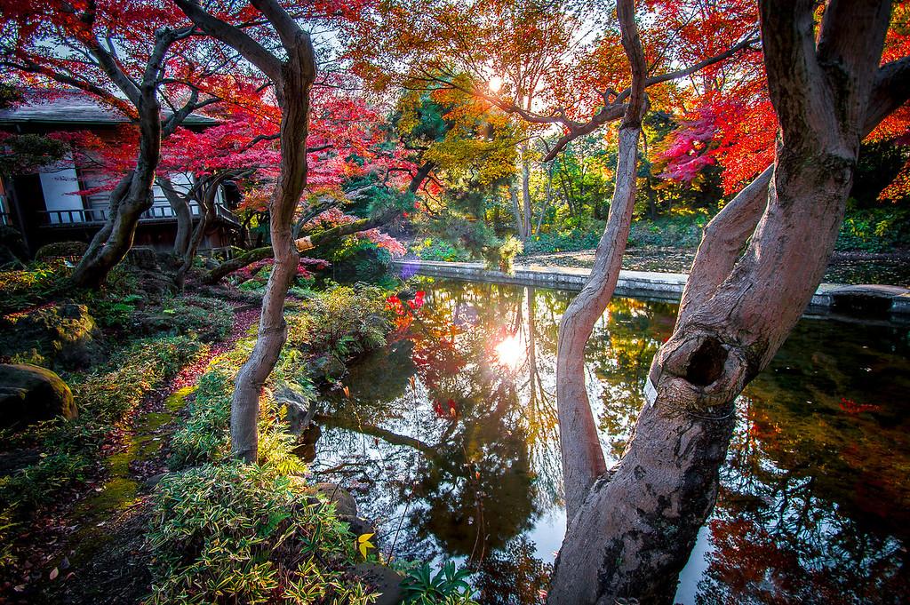 Tokyo Momiji
