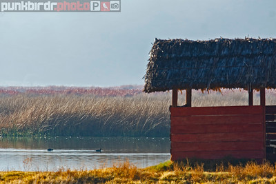 Cuzco Wetland