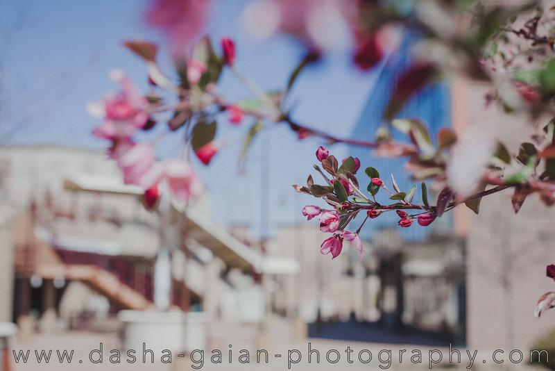 Spring in Boulder