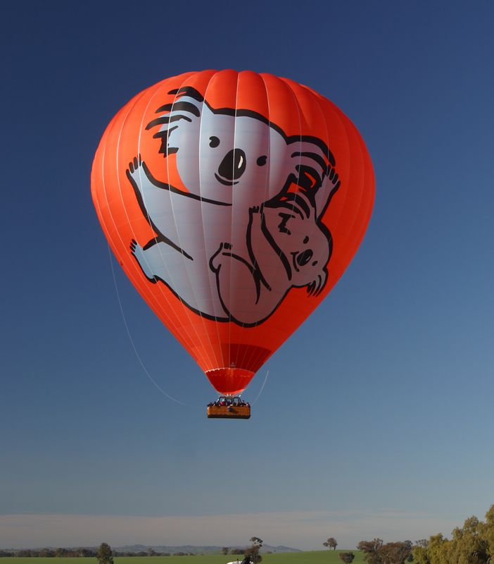 Hot_Air_Koala_Balloon_FLI_inflight_5393