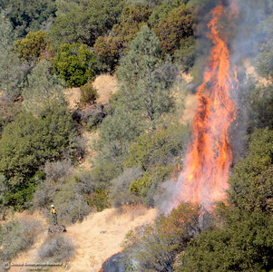 A firefighter can be seen in this photo at lower left as a tree blazes up along steep terrain as they battle a 50 acre fire along Hwy. 32 above Chico, Calif. Monday Sept. 25, 2017. (Bill Husa -- Enterprise-Record)