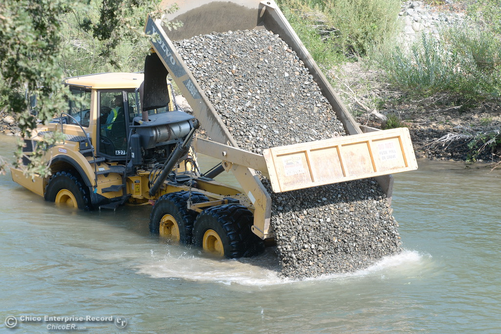 . A DWR dump truck adds gravel to the Feather River to help provide spawning beds for salmon Tues. Aug. 15, 2017. (Bill Husa -- Enterprise-Record)