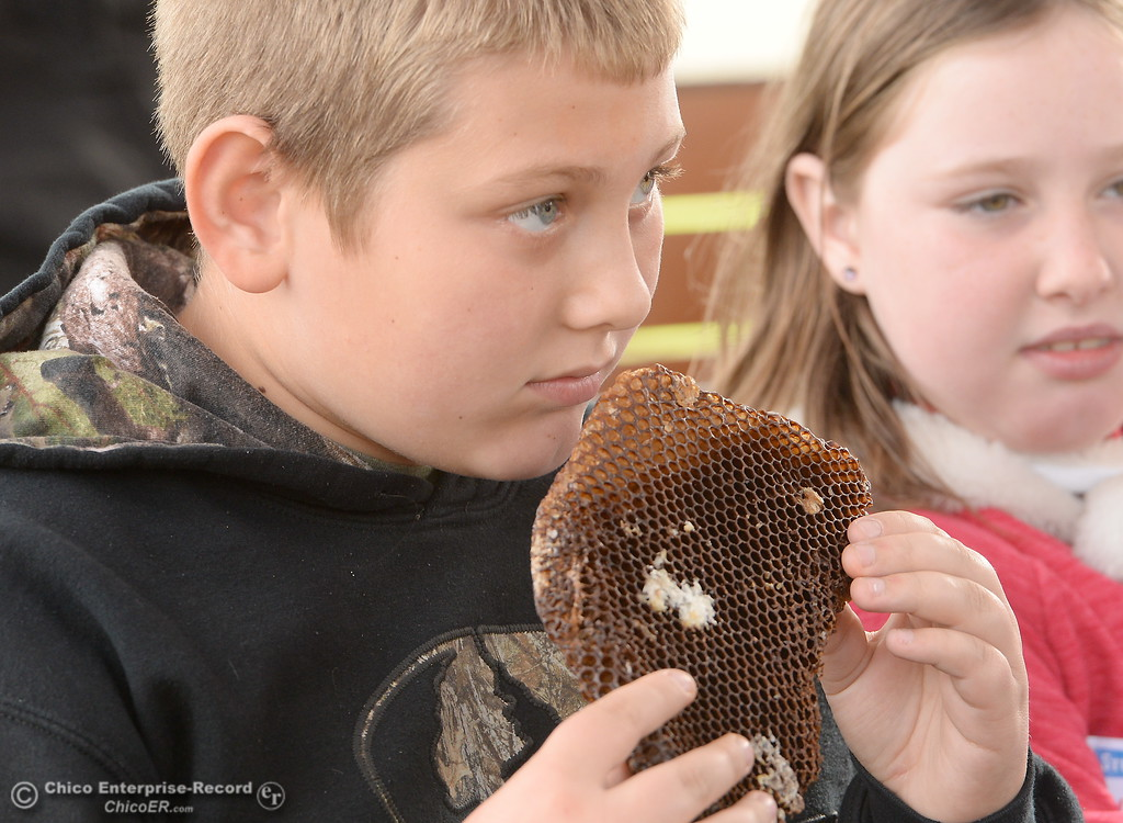 . Oakdale Heights fourth grader in Mr. Hanna\'s class Bodey Wilkey smells a honeycomb as he and other students learn about bees during the 10th annual agriculture student field day at Patrick Ranch in Chico, Calif. Thurs. Nov. 16, 2017. (Bill Husa -- Enterprise-Record)