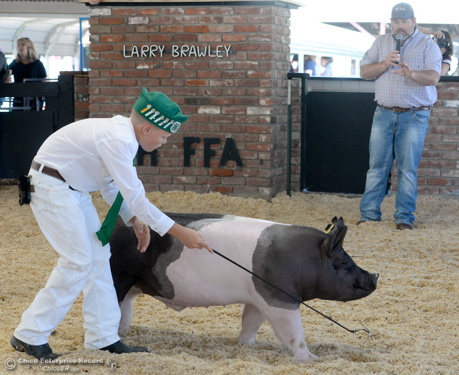 ". 12-year-old Will Ward of Orland, Calif. shows his Lake 4-H hog ""Cool Breeze\"" at the Glenn County Fair Wednesday May 17, 2017. Ward took 2nd place with his hog in this showing. (Bill Husa -- Enterprise-Record)"