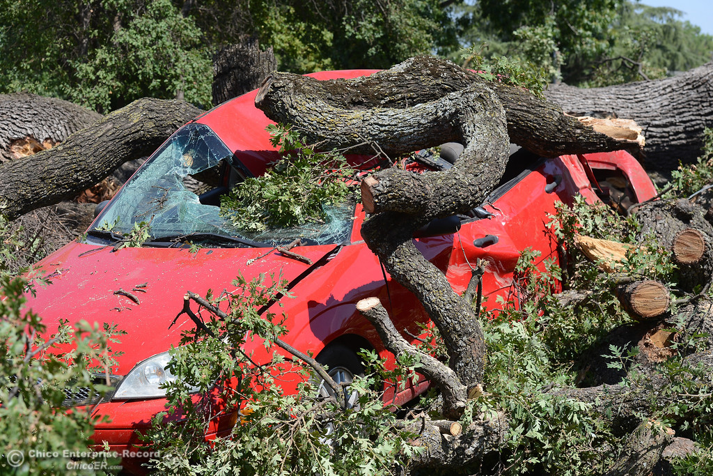 . Firefighters rescue a woman trapped under a fallen tree branch with a beehive and downed power lines Thursday, Aug. 24, 2017, at Community Park in Chico, California. (Dan Reidel -- Enterprise-Record)