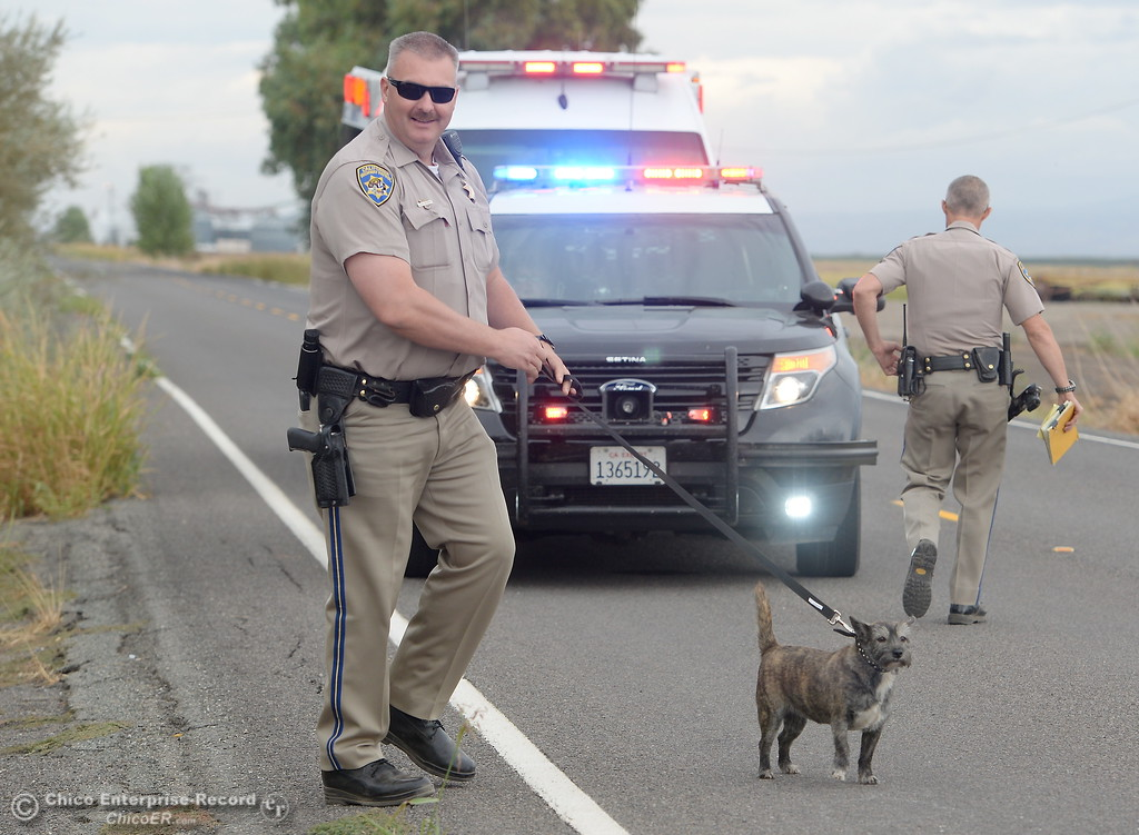 . CHP Officer John Murphy takes care of Callie, a dog owned by Marijane Pustejovsky, 64, of Colusa County as she is arrested for suspicion of driving under the influence following a single vehicle rollover accident on 7 Mile Lane in Chico, Calif. Wed. Sept. 20, 2017. (Bill Husa -- Enterprise-Record)