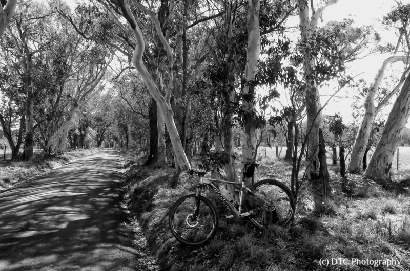 The road less travelled (Southern Tablelands)
