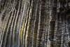 Iceland-Snaefellsnes Peninsula-ARNARSTAPI BIRD CLIFFS-Basalt columns