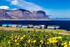 Iceland-Westfjords-Thingeyri-Fish drying barns