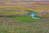 ICELAND-Fjallabak Nature Reserve-Landmannalaugar-Arctic cotton
