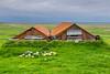 Iceland-Hrollaugsstaðir-Farm