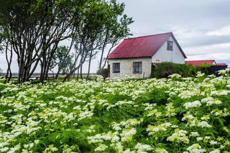 Iceland-Hamragarðar
