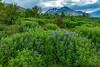 Iceland-Dalvik-Lupione field